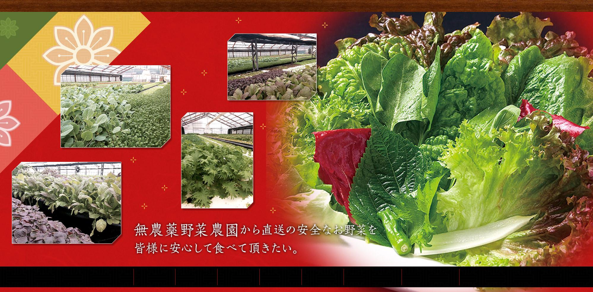 無農薬野菜農園から直送の安全なお野菜を皆様に安心して食べて頂きたい。
